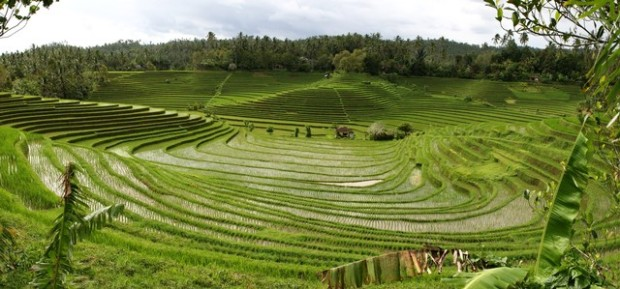 panorama_bali_rice_terraces_2_by_melmarc-d31nw18